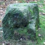 Kamień Napoleona na Drezdeńskich Wrzosowiskach